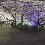夜桜VR 2017年舞鶴公園